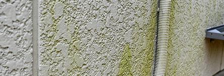 苔やカビの発生